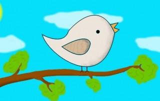 Ich denke, also bin ich? Was du von einem Vogel lernen kannst